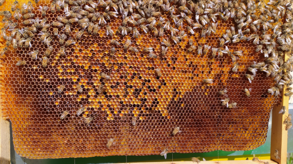 How the bees help our planet
